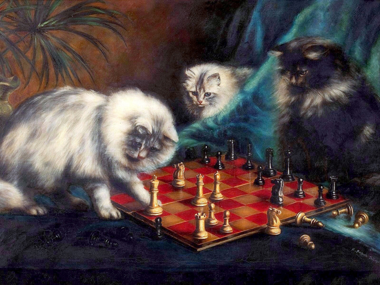 Cats kitten 760